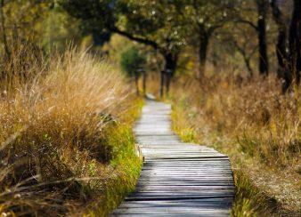 solução rápida para a depressão caminho longo
