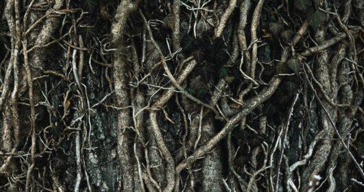 nossas raízes