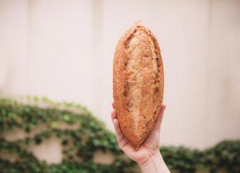 árvore do pão