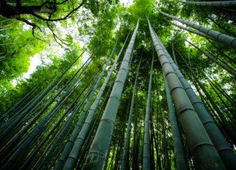 tao bambu arte sustentável