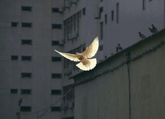 paz brasil